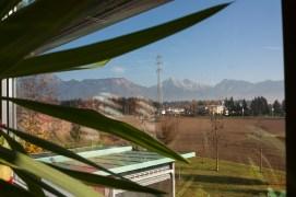 10_Kravanky rovnou za okny školy