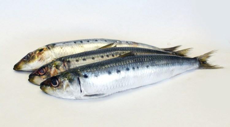 Sardines healthy