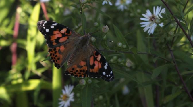 Schmetterlinge am GO – Teil 5