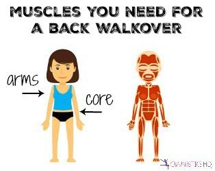 muscles you need for a back walkover