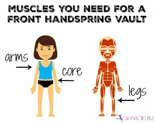 muscles you need for a front handspring vault