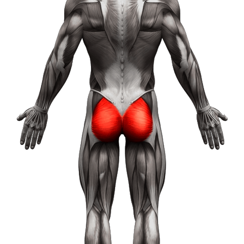 buttocks muscle used04 1