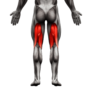 hamstrings muscle used08 1
