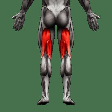 hamstrings muscle used08 1