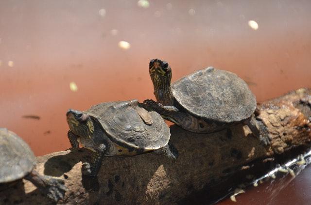 23 Μαΐου – Παγκόσμια μέρα… χελώνας