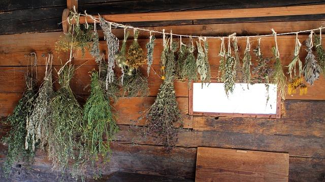gyógynövények feldolgozása, szárítása, tartósítása, tárolása