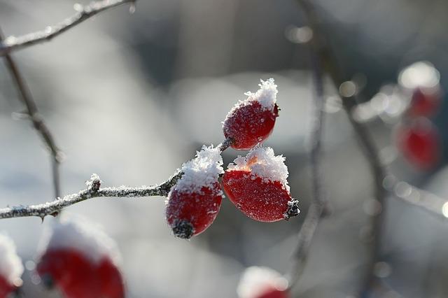 Tél, melengető gyógyteák