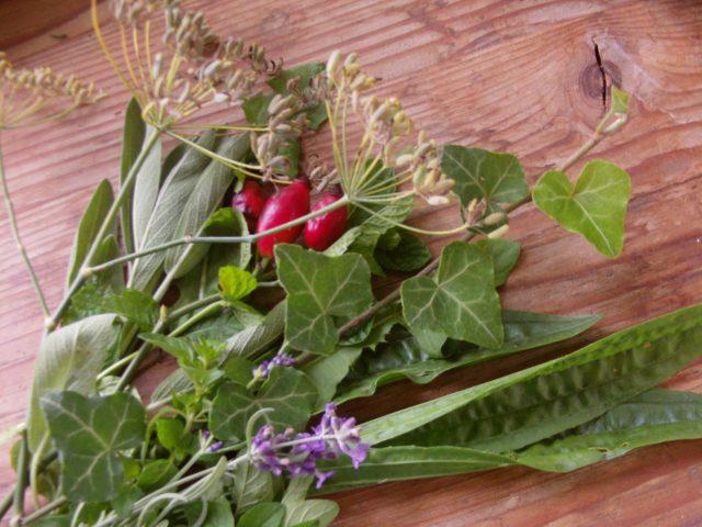 ősszel gyűjthető gyógynövények