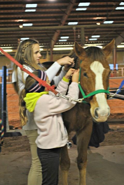 braiding-horse-mane