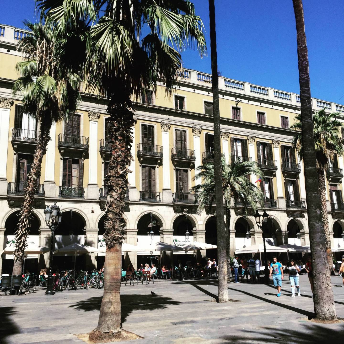 palmtrees placa reial