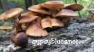 wp-1489868432069.jpg