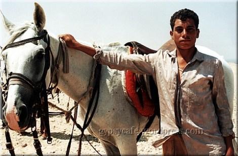 giza-horse-handler