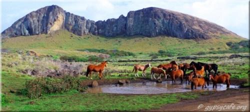 Horses in front of Rano Raraku - Easter Island