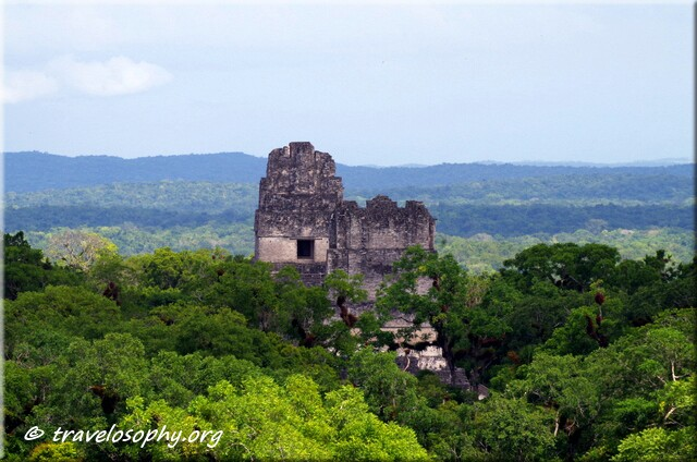 Tikal - Temples I and II sticking through the canopy – as seen from Temple IV - Tikal, Guatemala