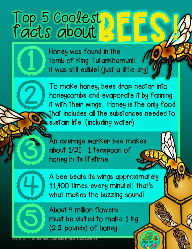 Top 5 bug facts series BEES
