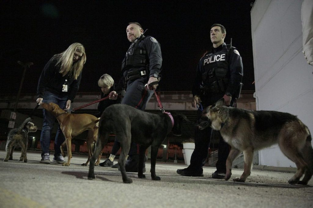 Police and helpers secure the stolen dogs after finding them and the van at 200 Queens Quay