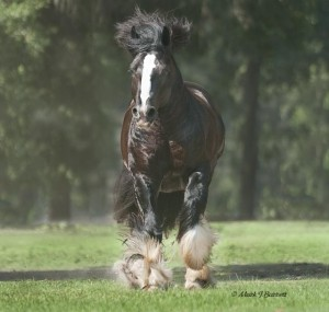 caymus-trot-front