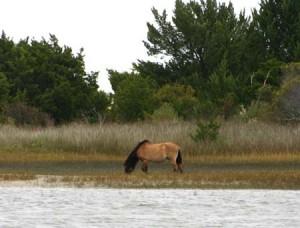 Wild Horse 3 web