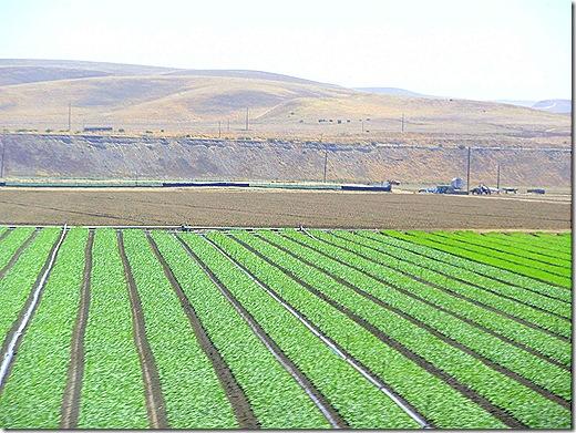 Produce fields 3