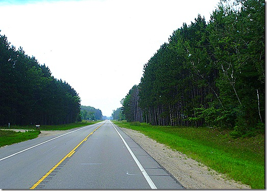 M-37 Highway thick forest