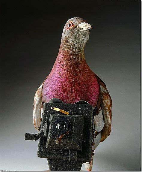PigeonCamera