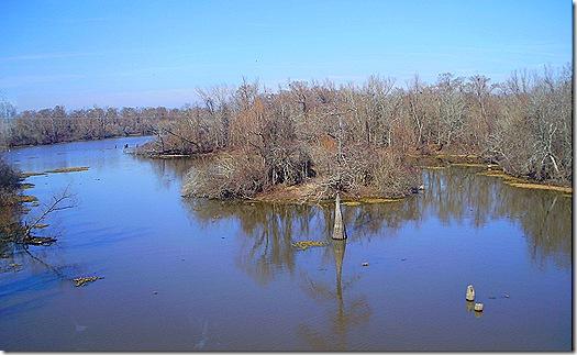 Atchafalaya Swamp 2
