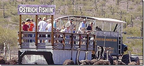 Ostrich fishing