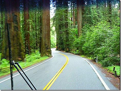 Big tree road 3