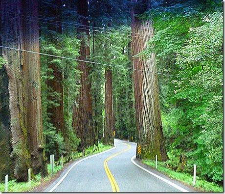 Winding tree road