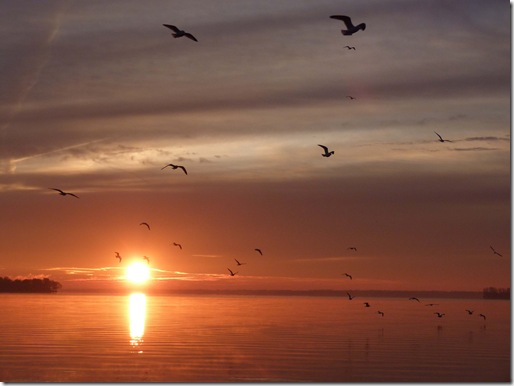 Celina sunrise birds