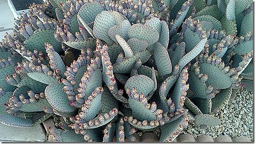 cactus patch 2