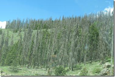 Tree blight