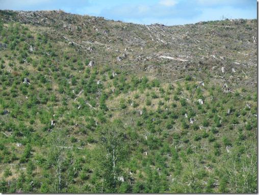 Barren hillside