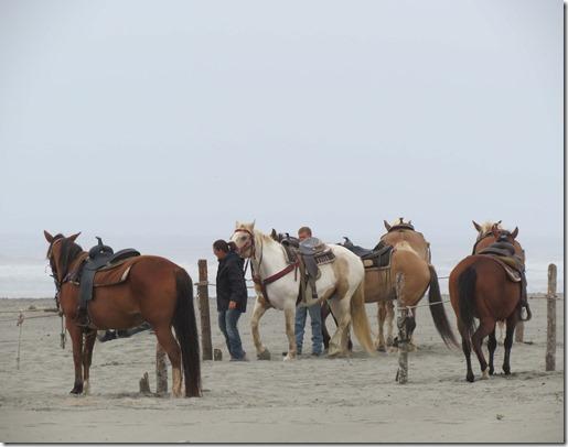 Horses on beach
