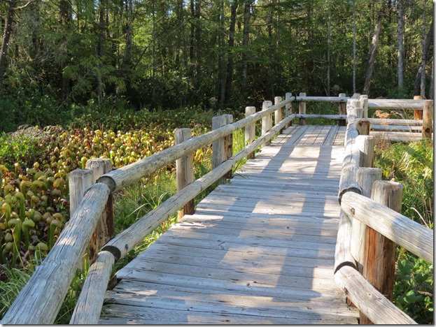 Darlingtonia walkway