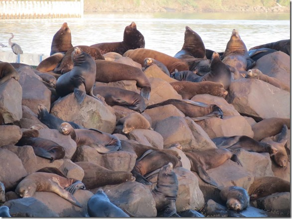 Sea lions sign 4