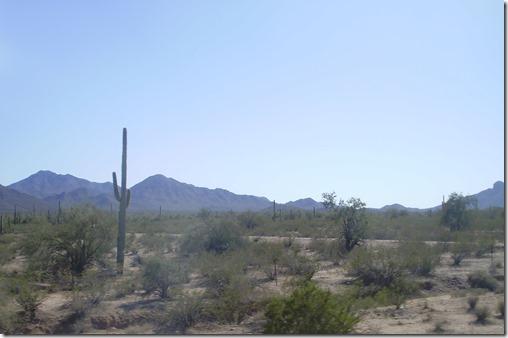 Cactus scenes