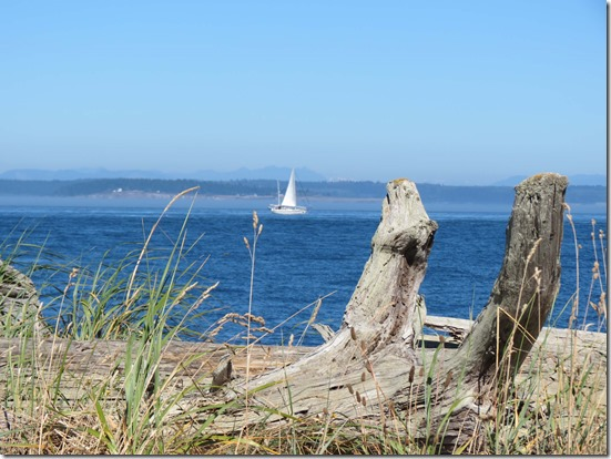 Sailboat and log