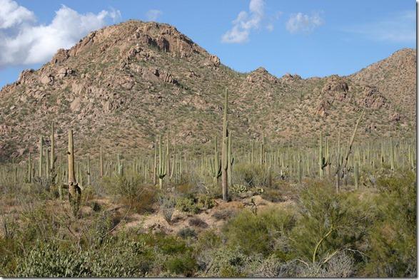 cactus view