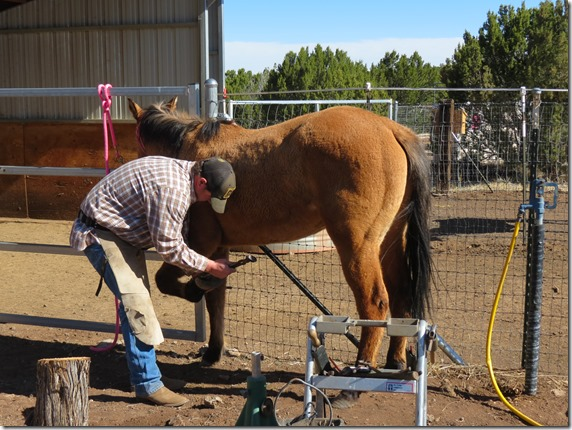 Farrier and Pixie 2