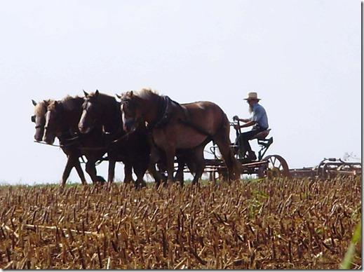Amish horse team 5