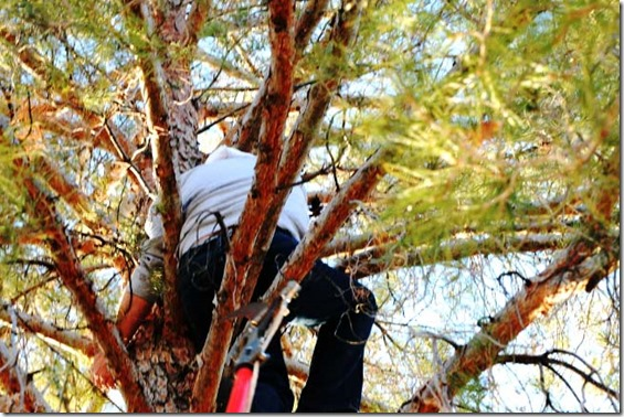 Jim Guld in tree