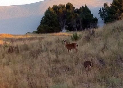 Deer small
