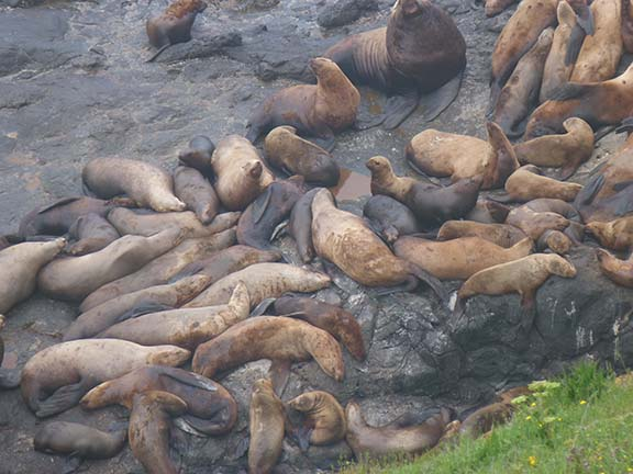 Sea lion group 2