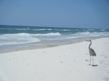 Wildlife on St George Isle