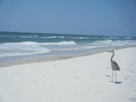Wildlife on St George Isle