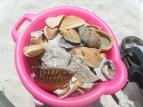 Pirate's Booty of Seashells