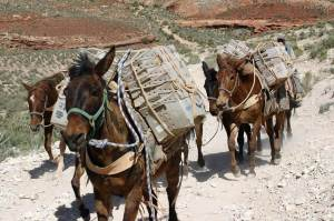 delivering love letters, workers around the world, grand canyon supai village mail delivery.