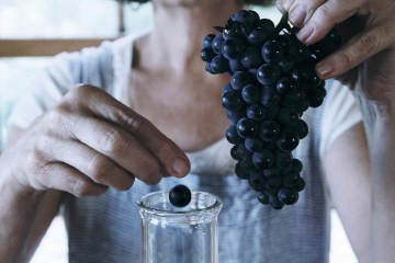 Vinfolk: Cameron Winery's Guide to Making Pinot Noir