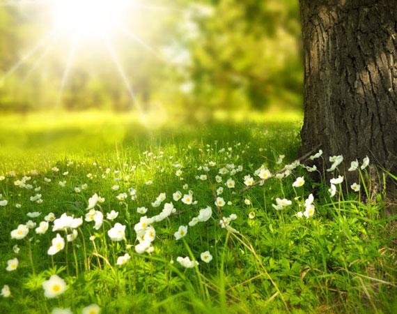 valkoiset kukat niityllä